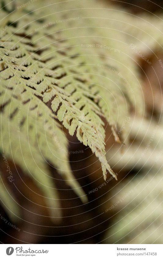 Blassgrün Natur schön ruhig Wiese Herbst Stillleben Echte Farne Blattgrün