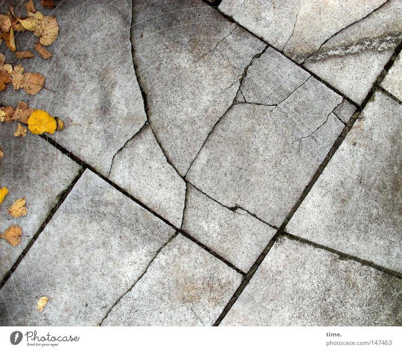 HH08.4 - Hochseilakrobat mit Federbuschhut Blatt Herbst grau Zusammensein Kraft Beton Ecke authentisch Bodenbelag Sehnsucht Dinge Bürgersteig gebrochen