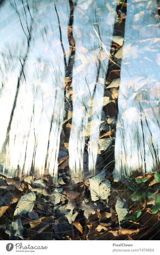Wald Natur Ferien & Urlaub & Reisen Pflanze blau schön Baum Landschaft Tier Umwelt Traurigkeit Herbst Gefühle Stil Kunst außergewöhnlich