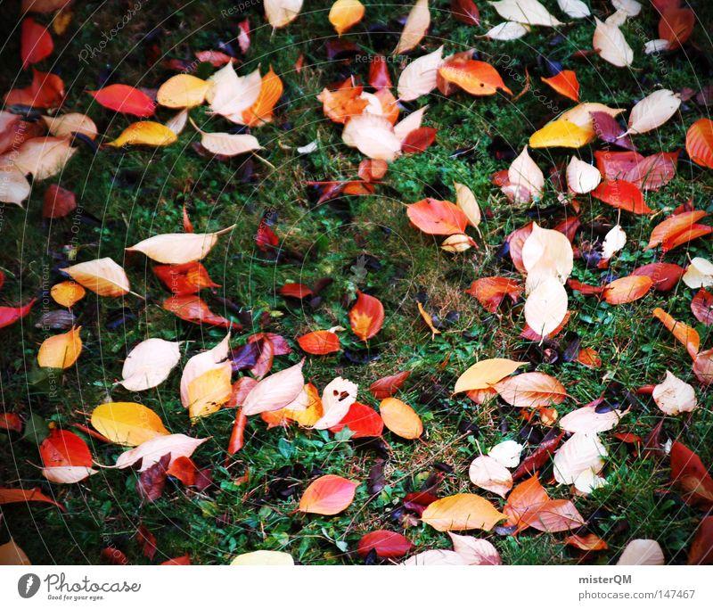 Am Boden Zerstört - Herbsttag Natur blau grün schön Farbe rot Blatt kalt gelb Farbstoff Wiese Tod Stimmung mehrere authentisch