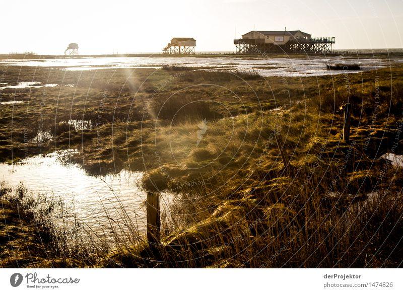 AT-ATs an der Küste gelandet Ferien & Urlaub & Reisen Tourismus Ausflug Abenteuer Ferne Freiheit Sightseeing wandern Umwelt Natur Landschaft Pflanze Tier Winter