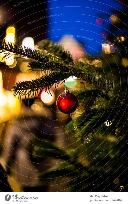 rot-grüne Weihnachtszeit Ferien & Urlaub & Reisen Weihnachten & Advent Pflanze Baum Umwelt Gefühle Lifestyle Stimmung Tourismus Zufriedenheit Fröhlichkeit