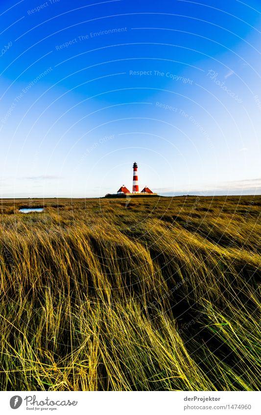 Wiesenmeer und Leuchtturm Westerhever Natur Ferien & Urlaub & Reisen Pflanze Landschaft Ferne Winter Umwelt Gras Freiheit Tourismus wandern Ausflug