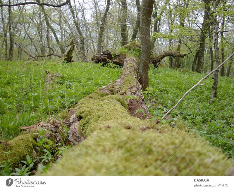 Baumstam #1 grün Wald Frühling Moss