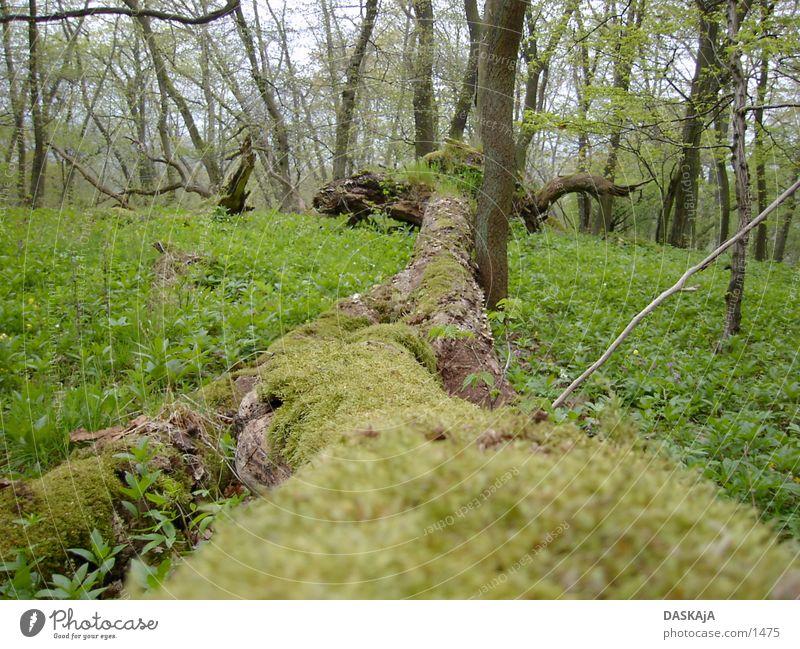 Baumstam #1 grün Wald Frühling
