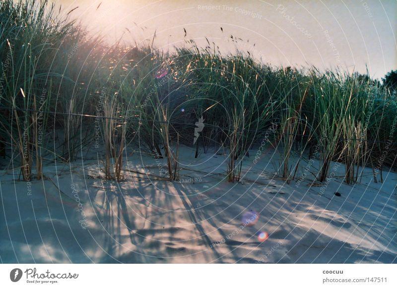 Strand Ostsee Meer Sonne Schilfrohr Stranddüne Düne Sonnenuntergang Sonnenblende Romantik Einsamkeit geheimnisvoll träumen Norden nordisch Nordsee Sommer