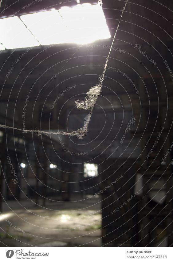 verlassen ruhig Einsamkeit dunkel grau verfallen Lagerhalle Halle Spinne Spinnennetz Spinngewebe Spinnenbeine