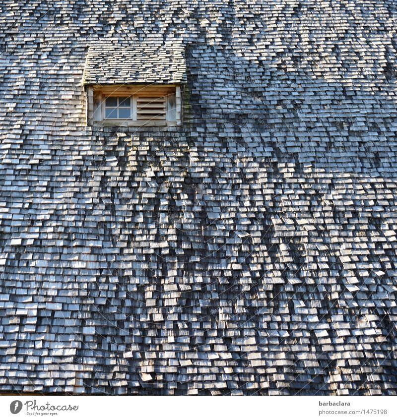 historisch | Schwarzwaldhaus Häusliches Leben Haus Schindeldach Landwirtschaft Forstwirtschaft Fenster Dach Holz alt authentisch außergewöhnlich kaputt grau