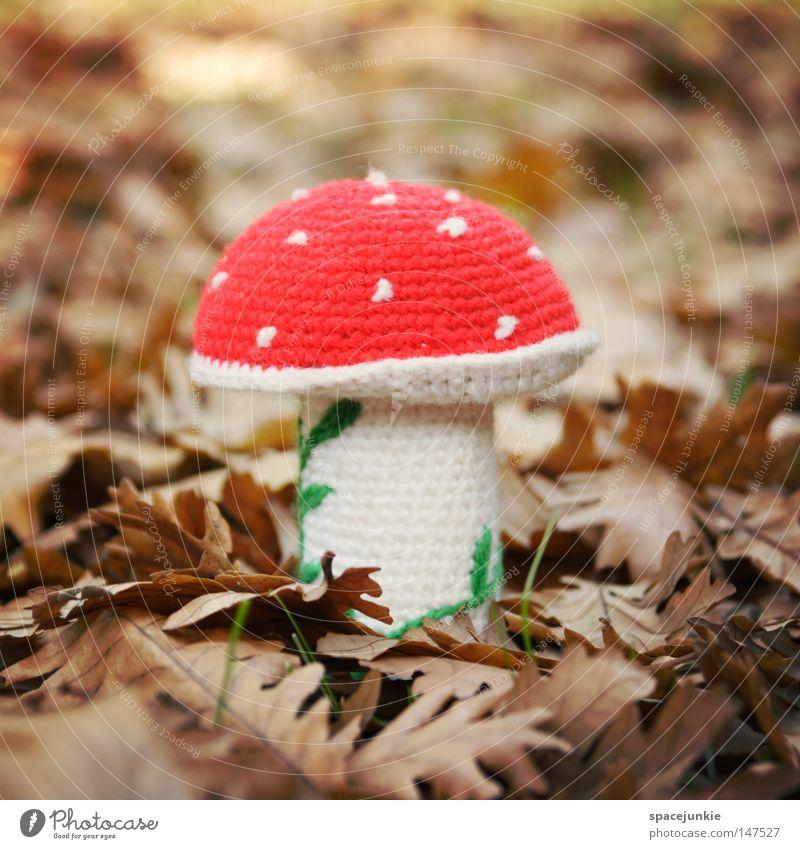 Glückspilz Pilz Fliegenpilz Giftpflanze vergiften vergiftet Waldboden Blatt Herbst Herbstlaub Illusion Rauschmittel Kitsch Freude Pilzvergiftung ungenießbar