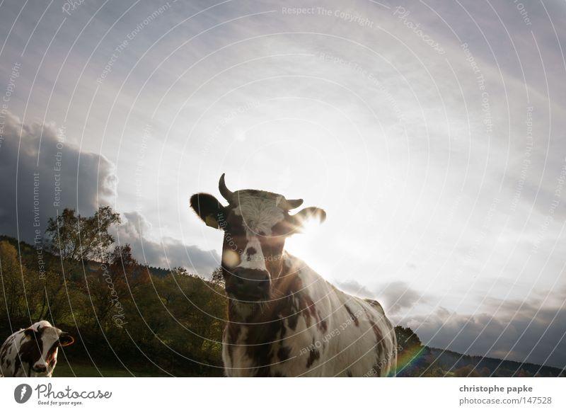 Take me away, Cowboy Farbfoto Außenaufnahme Menschenleer Textfreiraum rechts Textfreiraum oben Tag Licht Silhouette Gegenlicht Froschperspektive Tierporträt