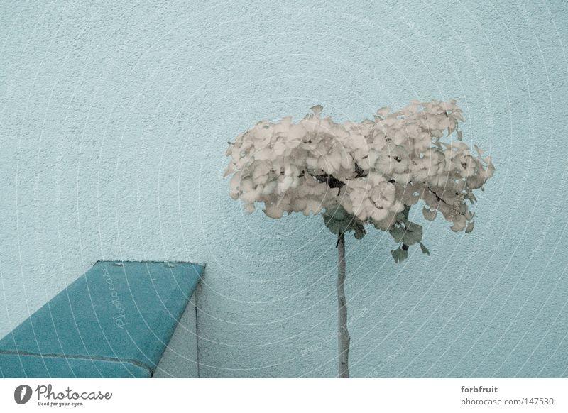 deprimation Ginkgo verblüht grau trist Herbst dunkel Terrasse schlechtes Wetter Blatt Einsamkeit Trauer Verzweiflung Silberpflaume Fächerblattbaum Fächerbaum