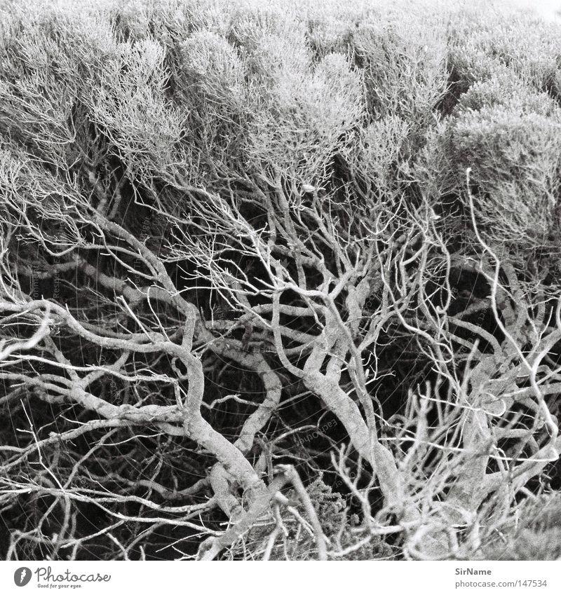 7 [fibonacci-strauch] schön Strand Küste Wachstum Sträucher Muster Unterholz Reifezeit abstrakt