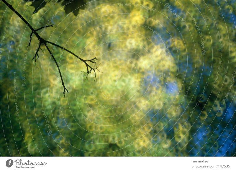 Mitten im Herbst Stimmung gold Blatt Geäst Zweige u. Äste Baum hoch oben schön Beleuchtung analog Dia blau gelb braun Farbe Farbstoff fliegen fallen Tod