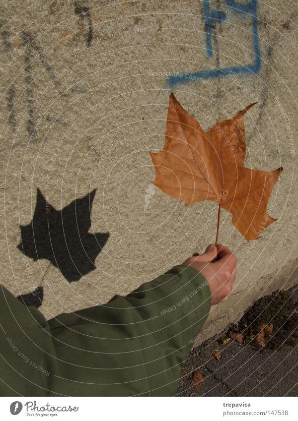 blatt Herbst Zauberstab Schatten spielen Pflanze Blatt Schulklasse Arme herbstlich Schauspieler Schattentheater Hand Straße Jahreszeit oktober spazieren Stadt