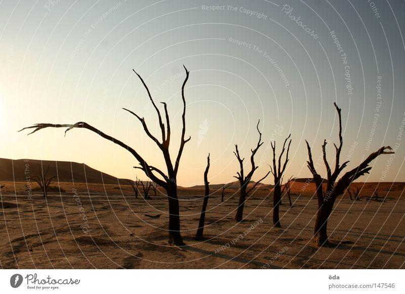 ausgestorben Baum Einsamkeit Tod Umwelt Wüste trocken Düne Riss Umweltverschmutzung vertrocknet Geäst Namibia Landschaftsformen Zweige u. Äste Namib Sossusvlei