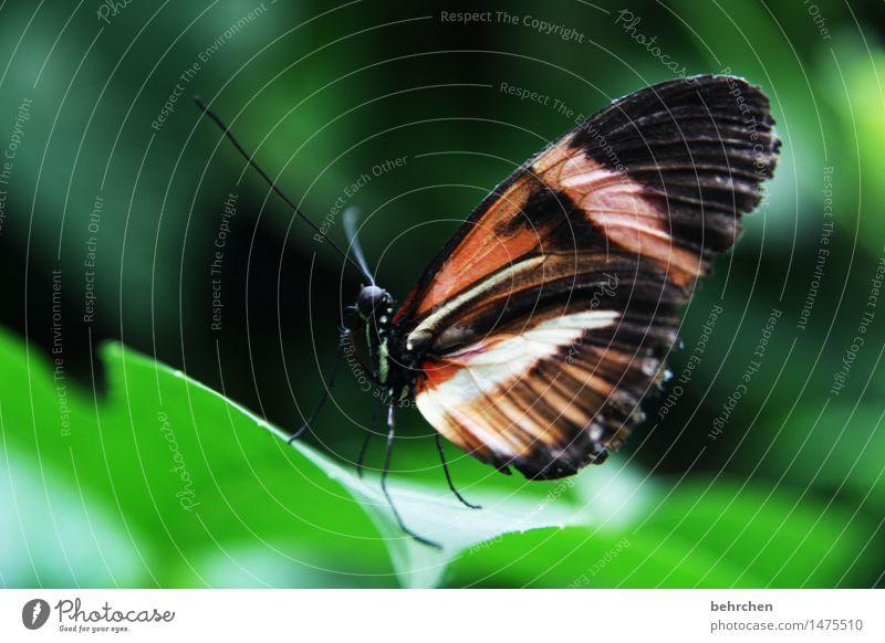 einfach nur schmetterling Natur Pflanze Tier Frühling Sommer Baum Sträucher Blatt Garten Park Wiese Wildtier Schmetterling Flügel 1 beobachten Erholung fliegen