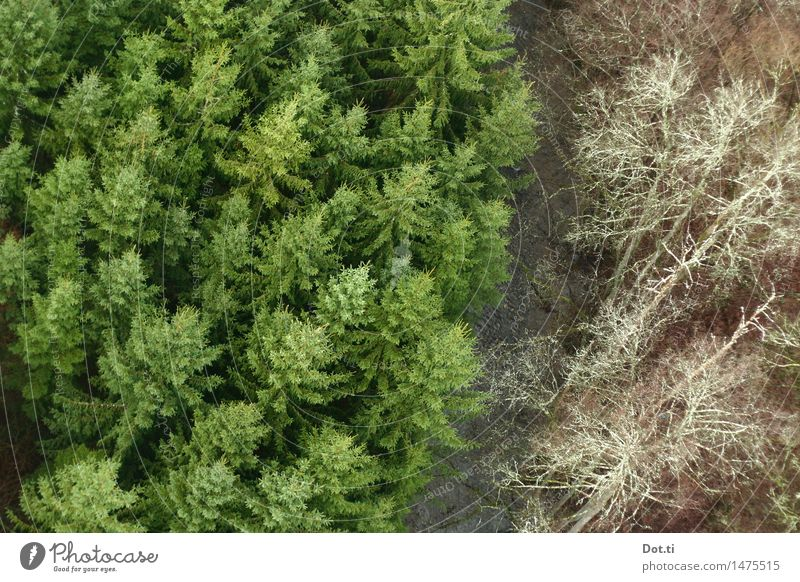 Tannenbaumgrenze Natur Landschaft Pflanze Wasser Baum Wald Bach Fluss hoch grün Höhenangst Nadelbaum Grenze zweiteilig Vogelperspektive Waldsterben Farbfoto