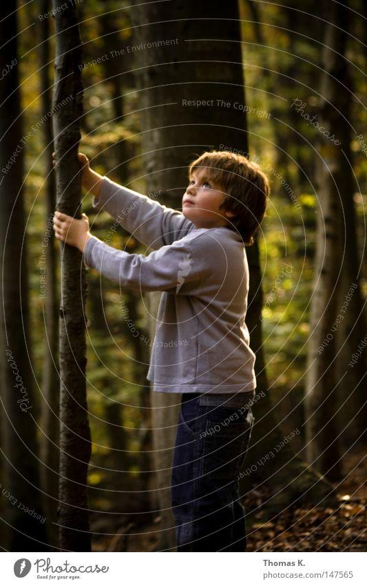 Bruder Baum Kind Freude Blatt Wald Junge Herbst Spaziergang Kindheit Schüler Gebet Baumrinde Geäst Schulkind Zweige u. Äste Lichtschein