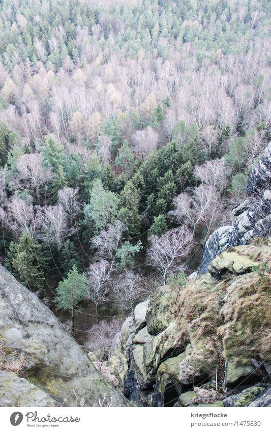 Baumfarben Natur Landschaft Pflanze Wald Felsen Berge u. Gebirge Stimmung Farbe Vogelperspektive Ferne Aussicht Sächsische Schweiz Lilienstein wandern Klettern