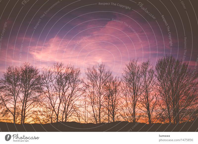 abend Himmel Winter Baum violett schwarz kahl Abenddämmerung Baumkrone ästhetisch Ast Silhouette Hintergrundbild himmelwärts vergilbt Farbfoto Textfreiraum oben
