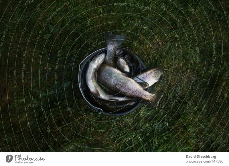 Ausbeute Fisch Glätte Auge Eiklar Protein Forelle Fischer Proviant Markt Ernährung Lebensmittel Fischfutter Fischkopf Fischerboot frisch Tod Sensenmann Futter