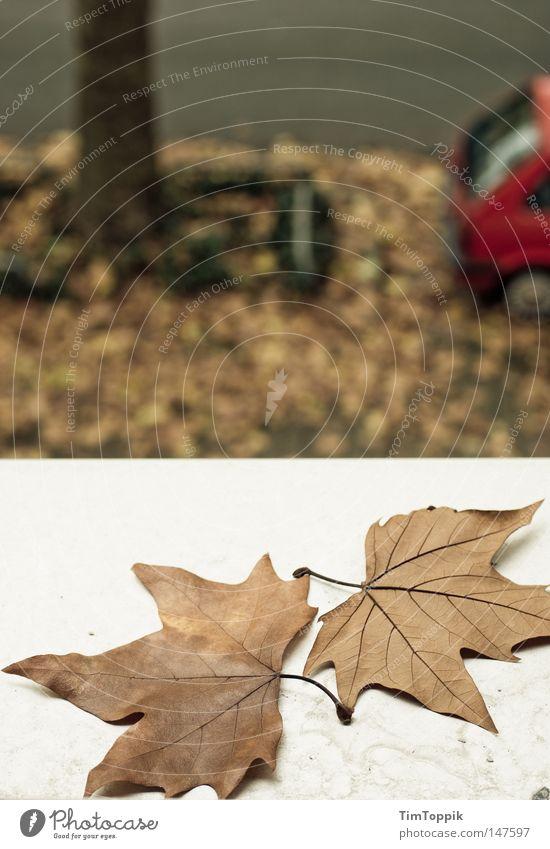 Fenster zum Herbst Fensterbrett Blatt KFZ PKW Straße Baum Blick Jahreszeiten Natur Straßenverkehr Baumstamm Bürgersteig parken Parkplatz Häusliches Leben