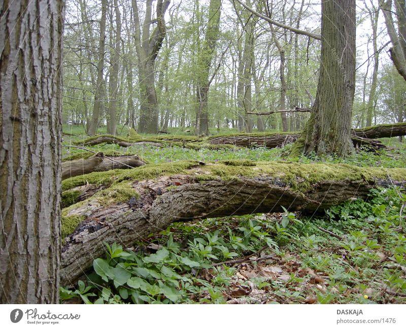 Baumstam #2 grün Wald Frühling violett Moss