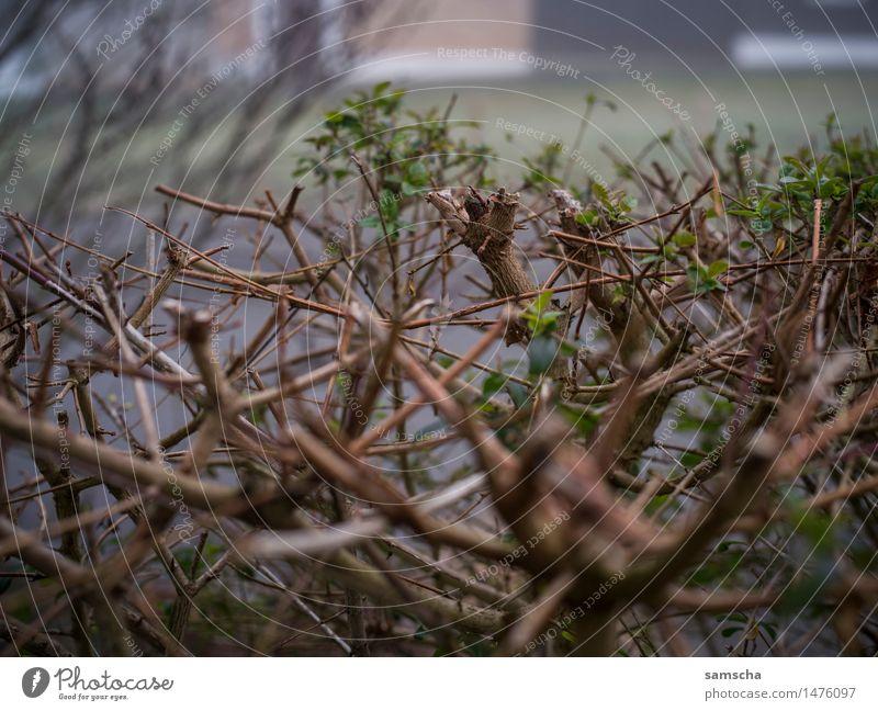 Wo ist der Schnee? IV Natur Pflanze grün Blatt Winter kalt Umwelt Herbst Frühling grau Garten braun Wetter Nebel trist Sträucher