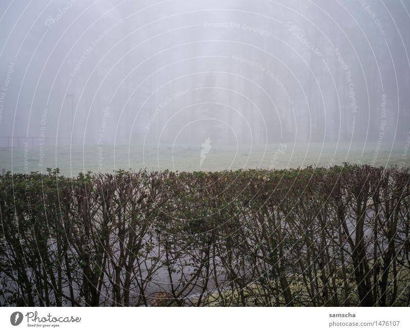 Wo ist der Schnee? II Garten Umwelt Natur Landschaft Pflanze Herbst Winter Klima Klimawandel Wetter schlechtes Wetter Nebel Regen Wald kalt trist herbstlich