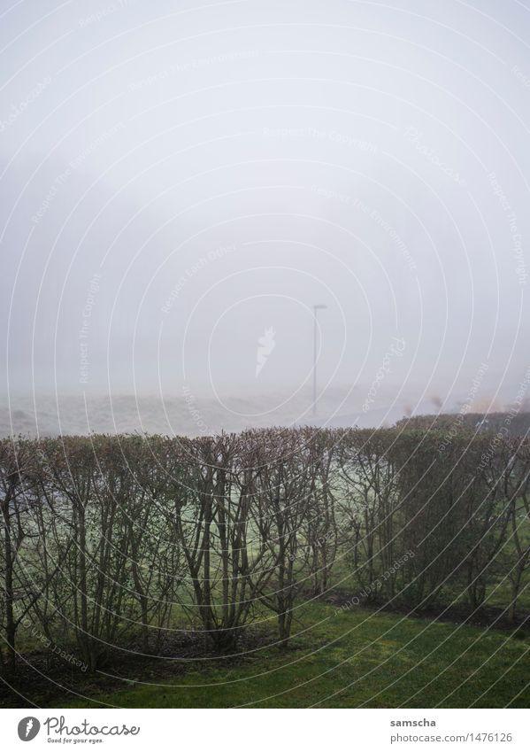 Wo ist der Schnee? Winter Umwelt Natur Landschaft Pflanze Luft Wolken Herbst Klima Klimawandel Wetter Nebel Garten Wiese nass Müdigkeit Trägheit bequem trist