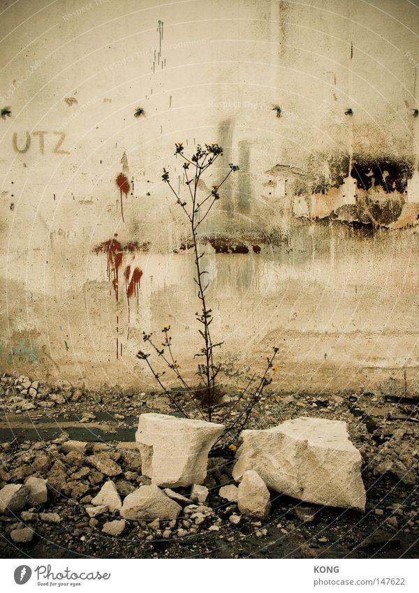 utz Pflanze Blume vertrocknet Tod kaputt Vergänglichkeit Demontage Verfall Zeit vergangen Ende Bruchstück Stein gebraucht Naturwuchs bewachsen Reifezeit