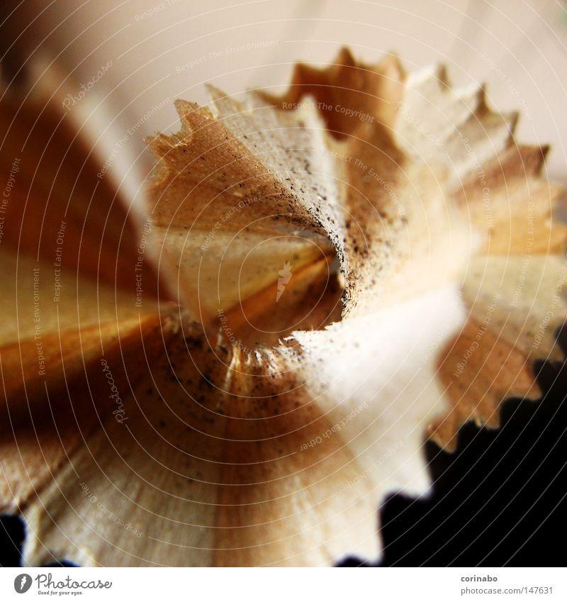 Büroarbeit Bleistift Holz Dinge braun beige Makroaufnahme Zickzack Wellenlinie Nahaufnahme Müll Rest gespitzt Schreibwaren dünn Schwache Tiefenschärfe Spirale