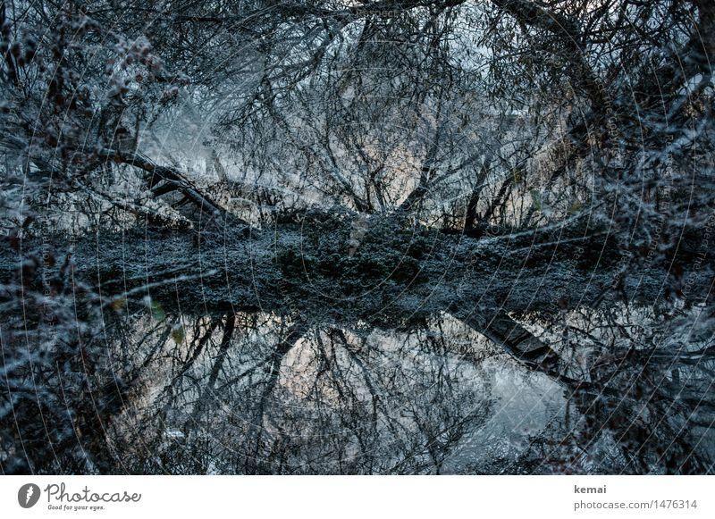 Winterwelt Abenteuer Umwelt Natur Landschaft Pflanze Wasser Eis Frost Schnee Baum Zweig Ast Flussufer Bach außergewöhnlich bedrohlich dunkel kalt Einsamkeit