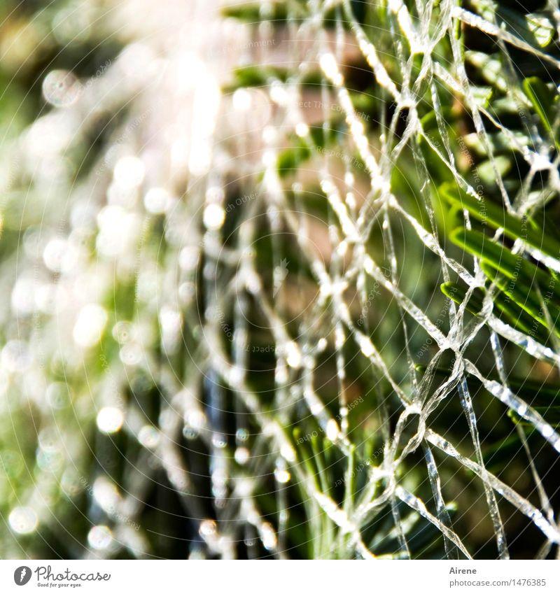 noch originalverpackt Weihnachten & Advent Baum Tanne Nadelbaum Verpackung Kunststoffverpackung Plastikhülle Netz Feste & Feiern verkaufen glänzend grün weiß
