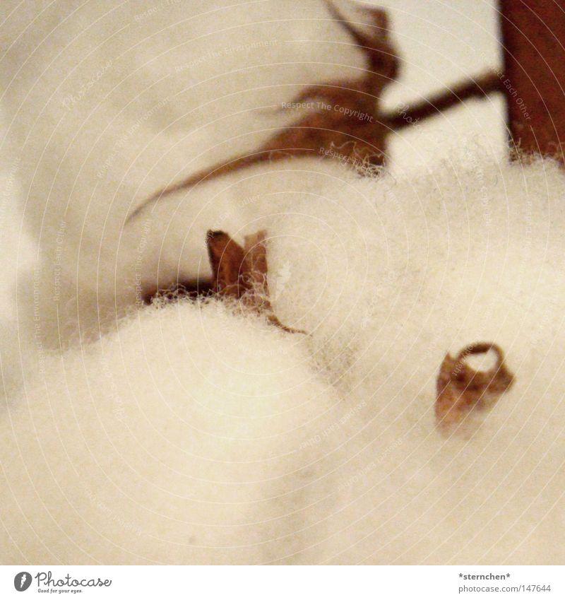 baumwolle weiß Baum Pflanze Leben Herbst hell braun Bekleidung Jeanshose T-Shirt weich Pullover kuschlig Dürre Wolle Baumwolle