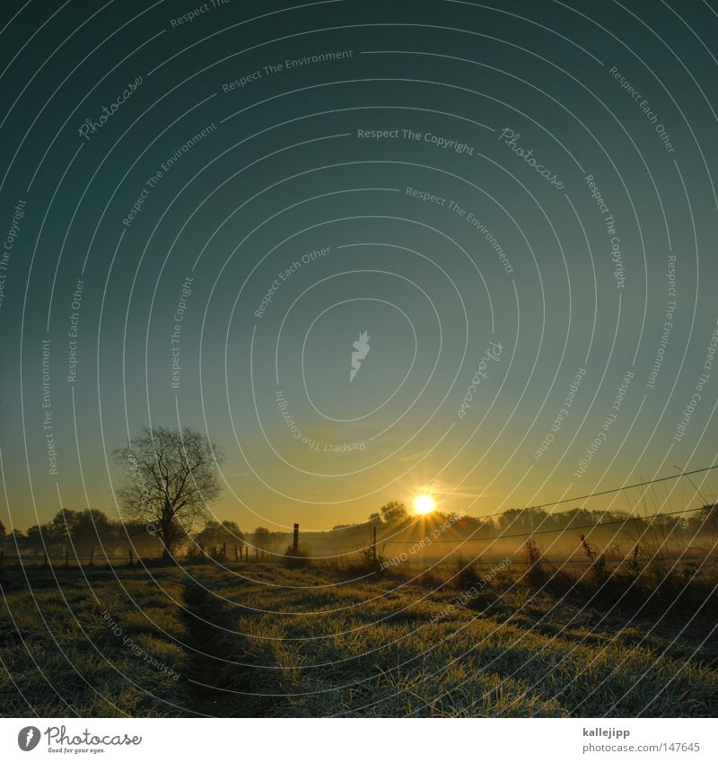 das könnte ein schöner tag werden Herbst Jahreszeiten Heimat Raureif Eis Eiskristall Grad Celsius Temperatur Thermometer kalt Brandenburg Nebel Morgen Stimmung