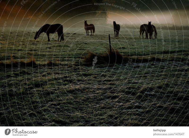 das wird ein schöner tag Pferd ästhetisch Anmut Nebel Morgen Sonnenaufgang Wiese Gras Wassertropfen Seil Tau Tier Umwelt Natur harmonisch Reiten Nüstern