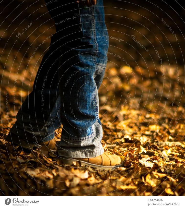Herbstfüße Blatt Beine Fuß Schuhe gold Jeanshose Hose Jahreszeiten Stiefel Jeansstoff Waldboden