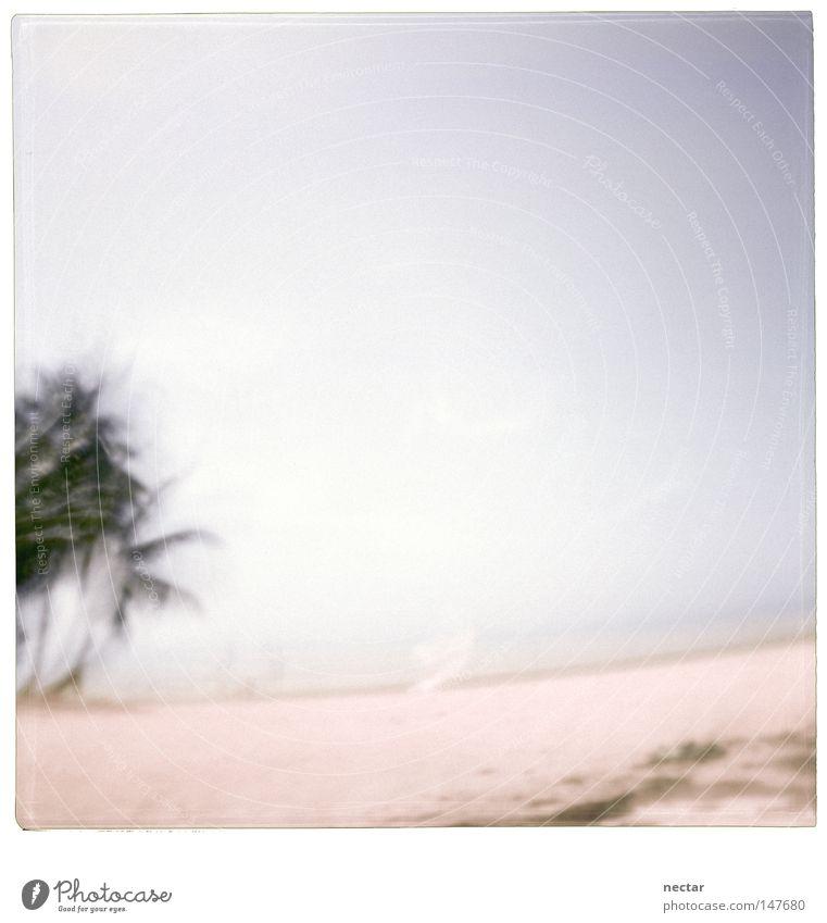 Caribbean Beach Licht Wasser Meer Strand Palme Sommer Ferien & Urlaub & Reisen ruhig Frieden Zen Buddha Landschaft Landschaftsformen rosa Kraft Konzentration