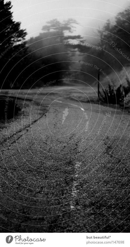 a foggy day° Straße Nebel geheimnisvoll Verkehrswege unheimlich spukhaft Korsika Ungeheuer