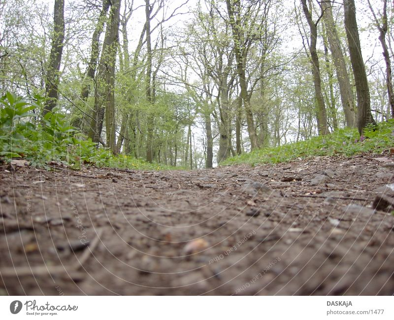 Trampelpfad braun grün Baum Wald Wege & Pfade