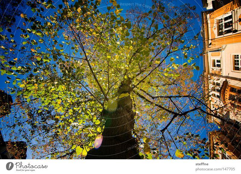 märchenhaft grün Baum Herbst Beleuchtung Stimmung Märchen Märchenwald Jugendstil