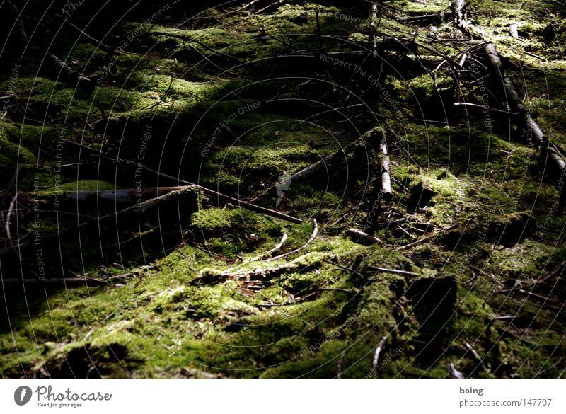 Laub im Märchenwald im Spessart Wald Bodenbelag Boden weich Jagd Duft Moos Waldboden Waldlichtung Nadelwald Revier Baumstumpf Fallensteller Bruchwald