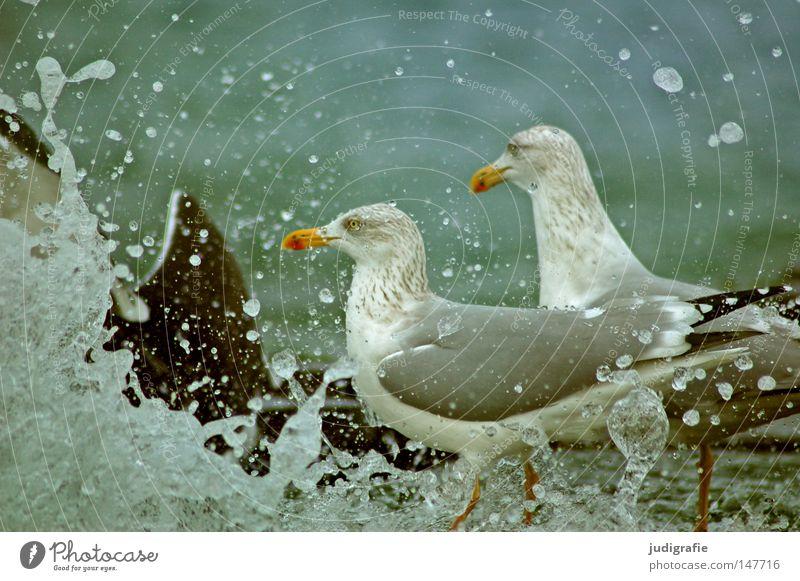 Ostsee Wasser Meer Strand Ferien & Urlaub & Reisen Tier Farbe Erholung Vogel Küste Wind frisch Schwimmen & Baden Sturm Möwe spritzen