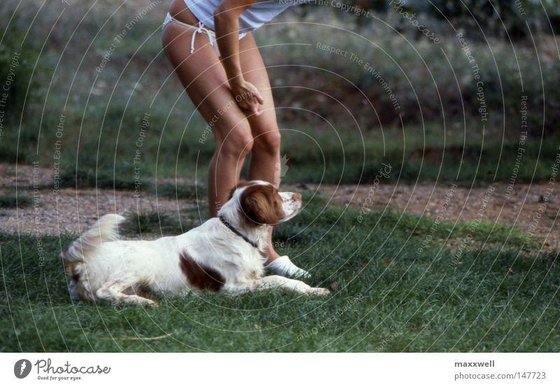 Hundeleben Freude Wiese Hund Frau Konzentration Wachsamkeit Säugetier Junge Frau Jagdhund