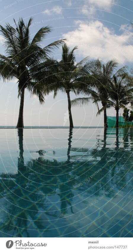 Palmen am Pool Natur Wasser Himmel Meer Pflanze Sommer Ferien & Urlaub & Reisen Wolken Horizont Schwimmbad Asien Palme Thailand Kokosnuss Chlor Koh Phangan