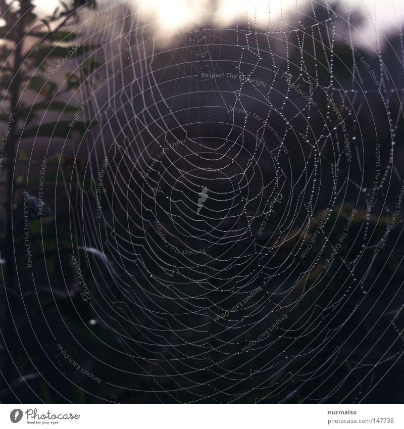 Spinne@Home II Natur grün Herbst Tod Stimmung glänzend Angst Fliege authentisch Wassertropfen Kreis Zeichen Tropfen Landwirtschaft Netz durcheinander