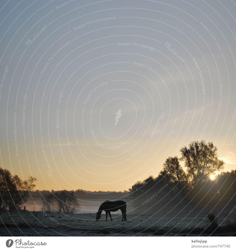 wild, wild brandenburg Pferd schön ästhetisch Anmut Nebel Morgen Sonnenaufgang Wiese Gras Wassertropfen Seil Tier Umwelt Natur harmonisch Nüstern Pferdegebiss