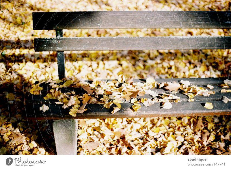 Dreiundsiebzig Jahre schön Baum Sonne Blatt Einsamkeit Erholung Herbst Tod Garten Park Wärme Stimmung warten Bank Ende Physik