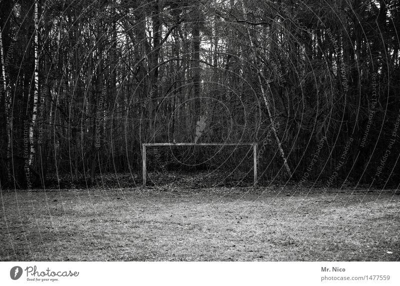 die wahrheit liegt auf dem platz Natur Baum Einsamkeit Winter Wald Umwelt Herbst Wiese Sport Freizeit & Hobby trist Vergänglichkeit Fitness Verfall Spielfeld